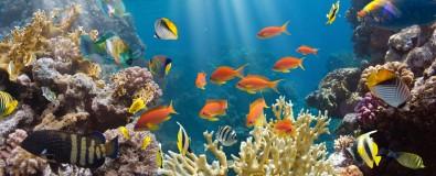 Aquaristikworkshop