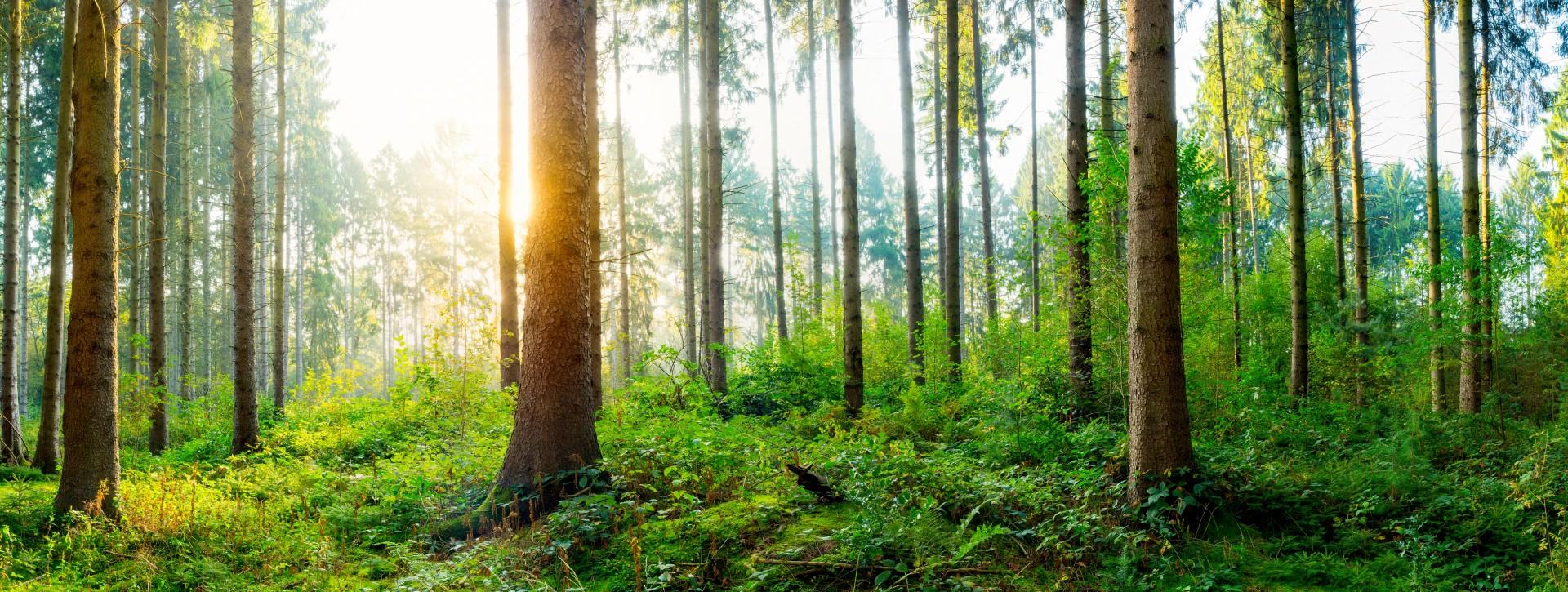 Landmarkt Nachhaltigkeit