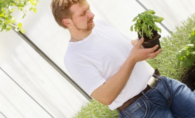 Gartenbau Krenn